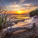 Driftwood Sunset by Jonicool