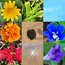 Chakra Colours from Nature by Lauren E Tarrant