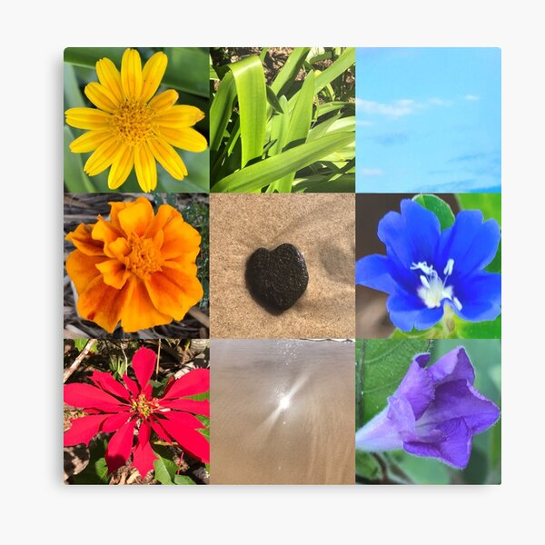 Chakra Colours from Nature Metal Print