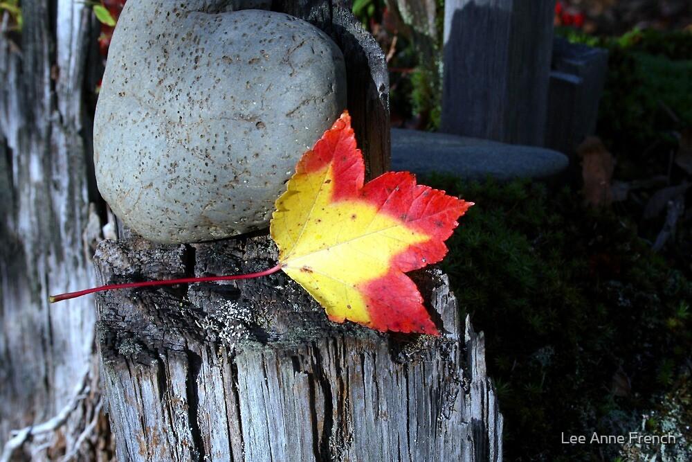 Lone Leaf by Lee Anne French