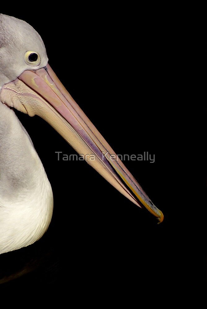 Pelican by Tamara  Kenneally