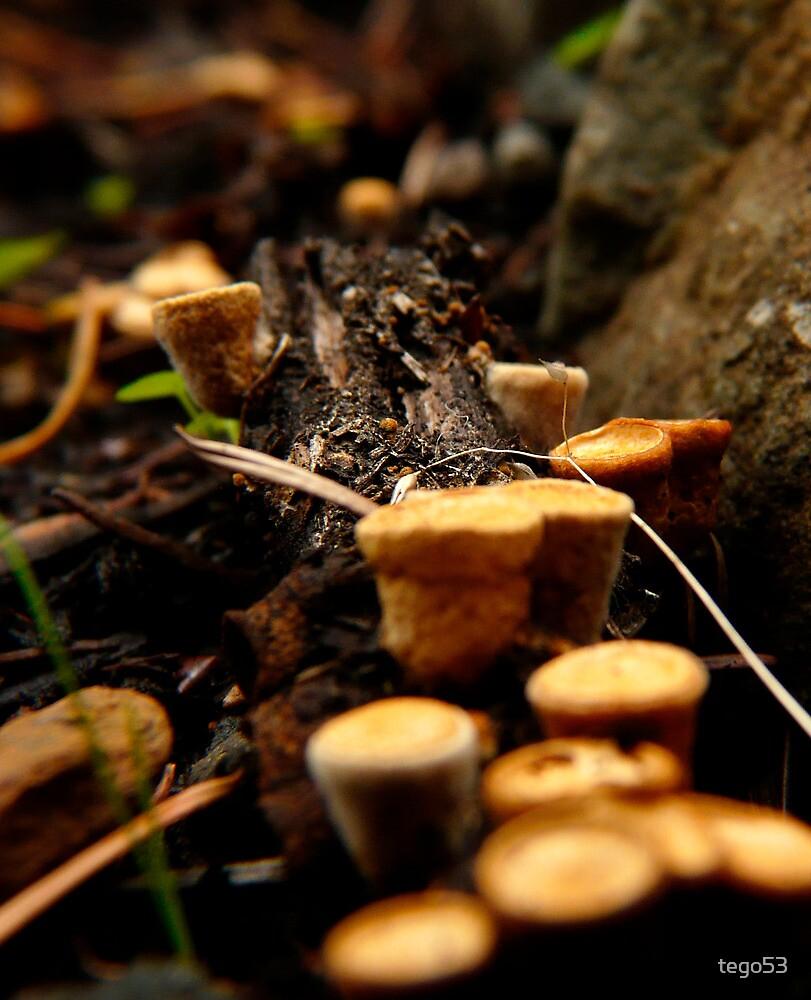 fungus on a log by tego53