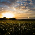 Te Atatu Peninsula Sunrise by CMDRShane