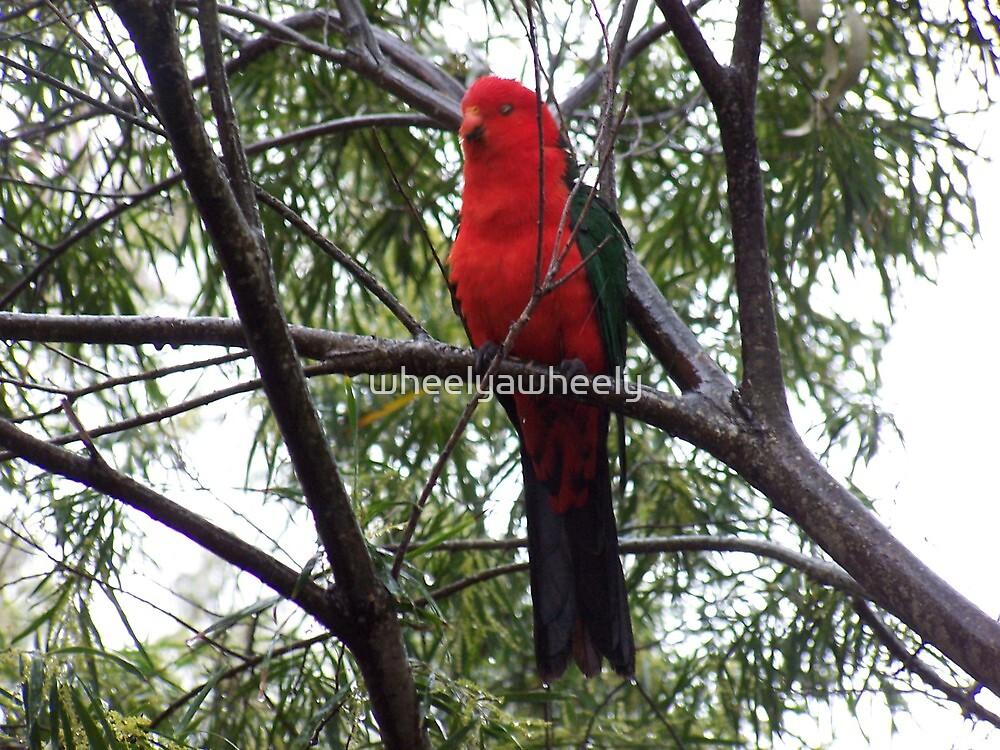 Bird at Kiola Caravan Park by wheelyawheely