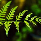 New Zealand Fern by CMDRShane