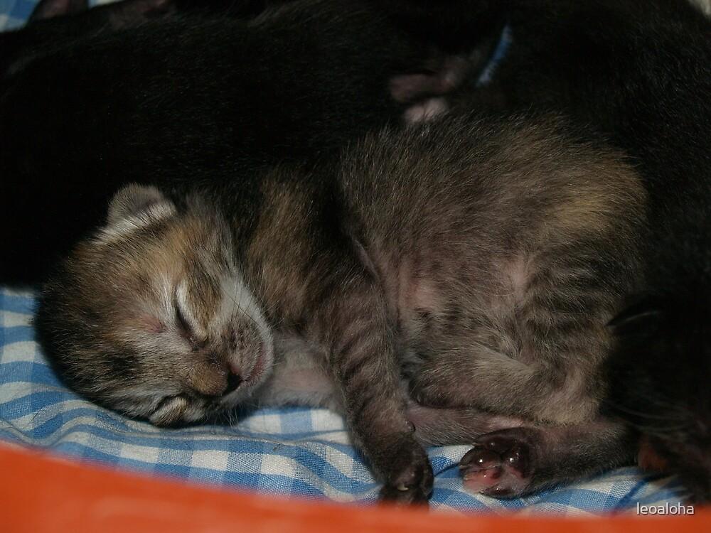 Tabby newborn by leoaloha