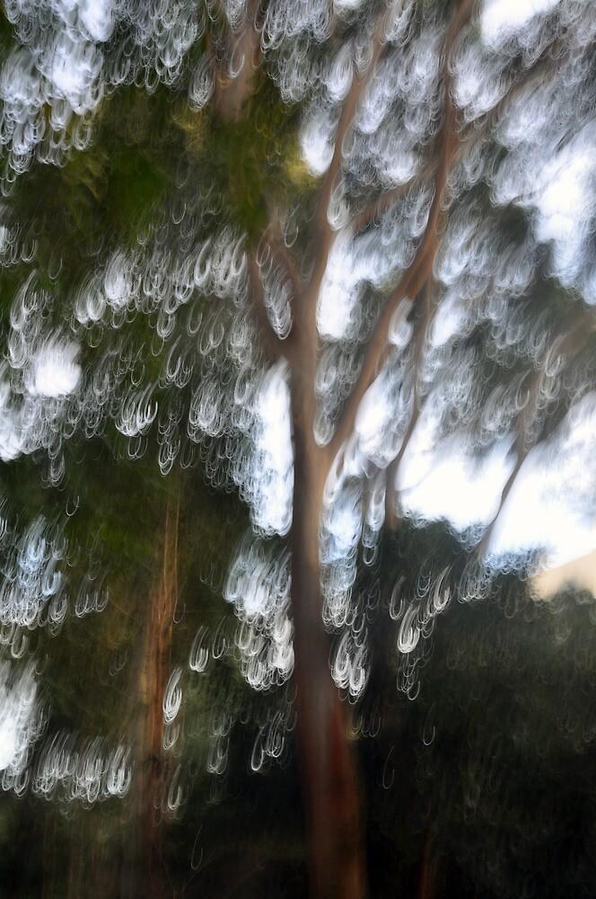 Blurred Tree - Lane Cove National Park by Jason McFarlane