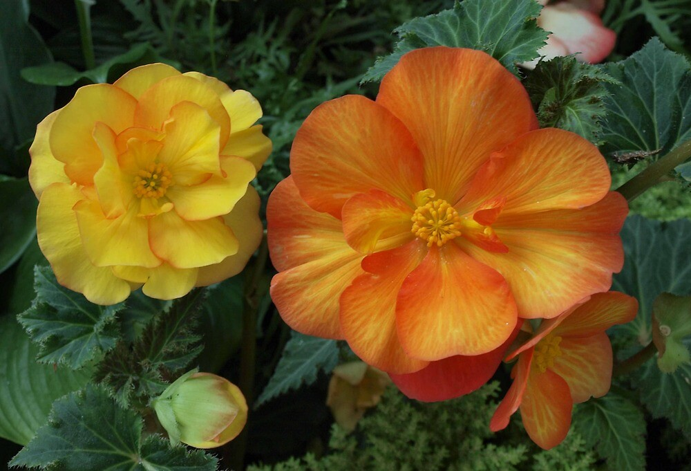 Yellow and Orange by Allison Peters