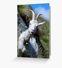 SWISS GOAT Greeting Card