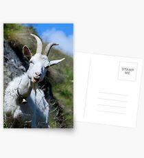 SWISS GOAT Postcards