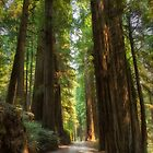 Into the Forest by Kathy Weaver