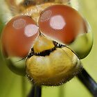 DragonFly Compound Eyes by Jonathan Hughes
