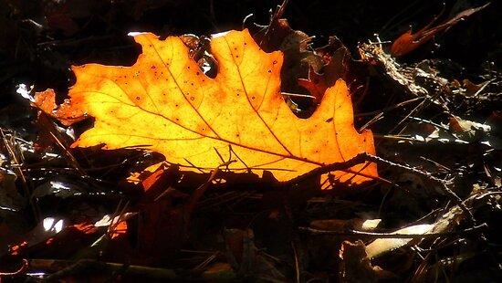 Autumn dreams  by DutchLumix