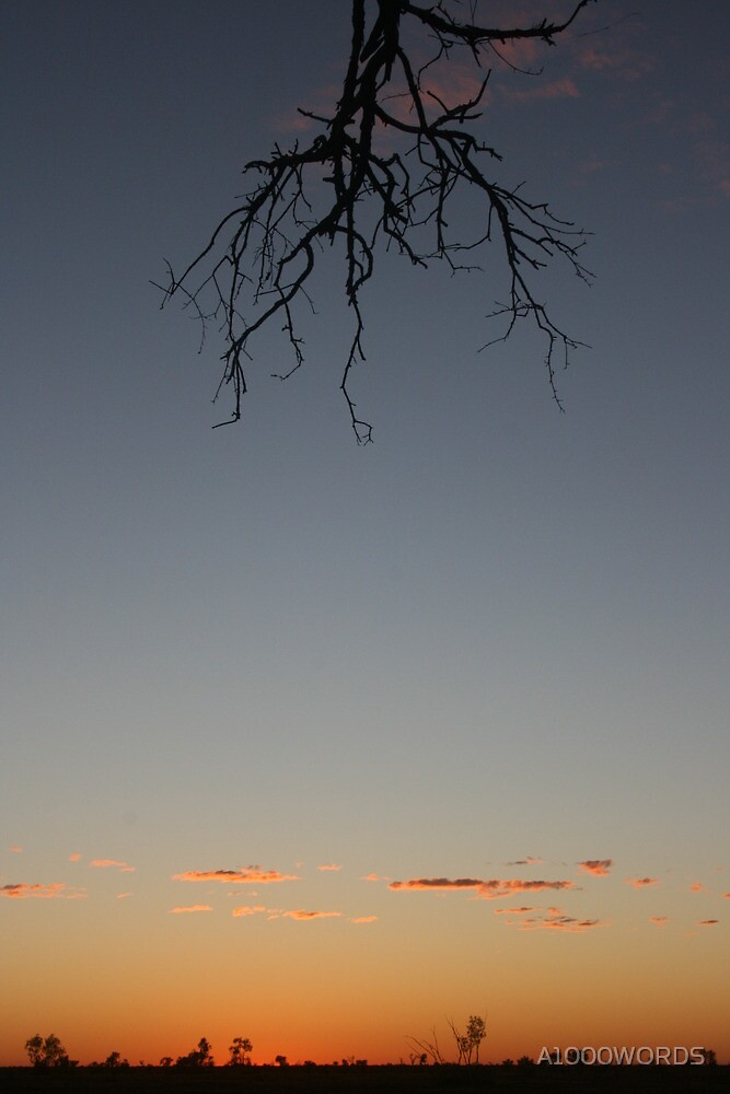 Branch @ sunrise... by A1000WORDS
