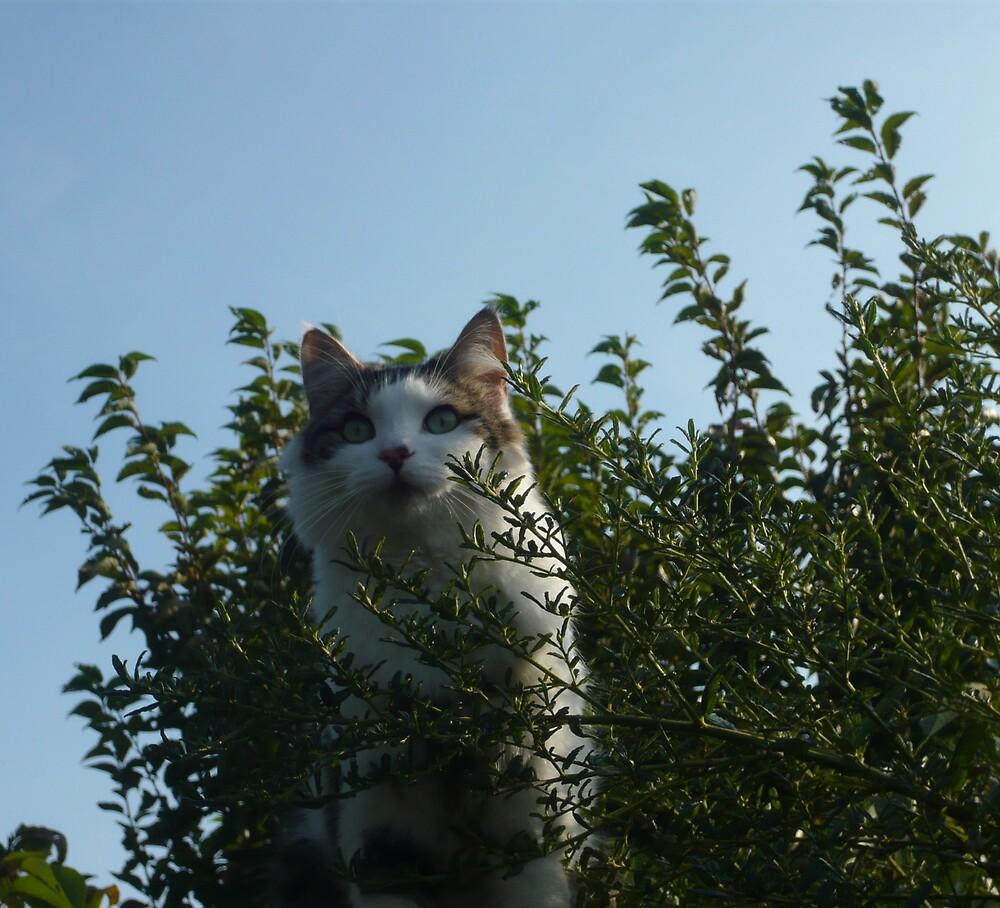 Cat  by JoshHardman