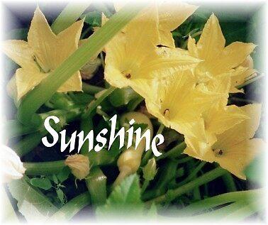 sunshign by Sandra Isherwood