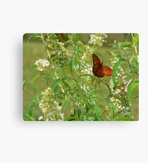 """""""A Butterfly Enjoying The Nectar Of A Flower"""" Canvas Print"""