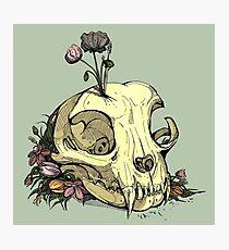 Little Skull Colour Photographic Print