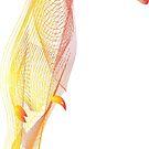 Toucan colourful bird by Magda Hanak