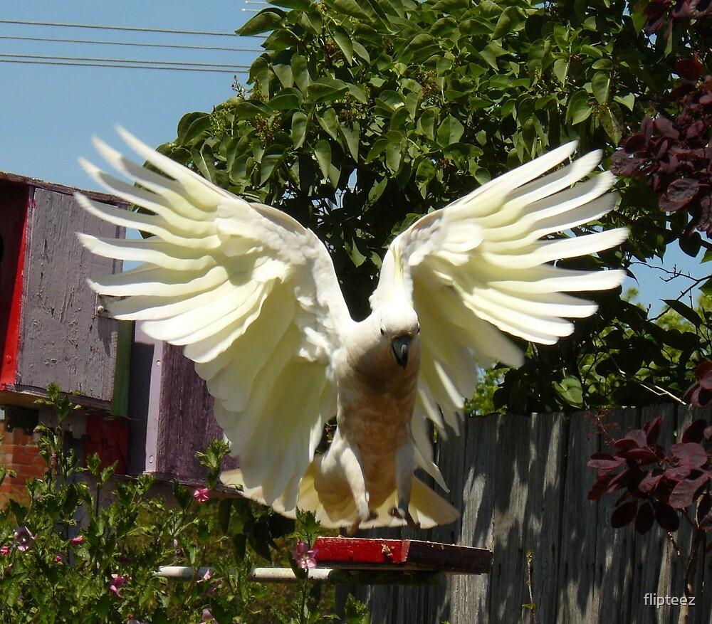 Bird Series...3 by flipteez