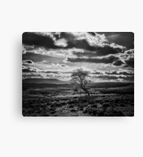 Survival of the pigheaded Canvas Print