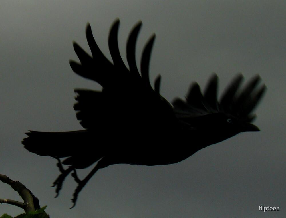 Bird Series...4 by flipteez