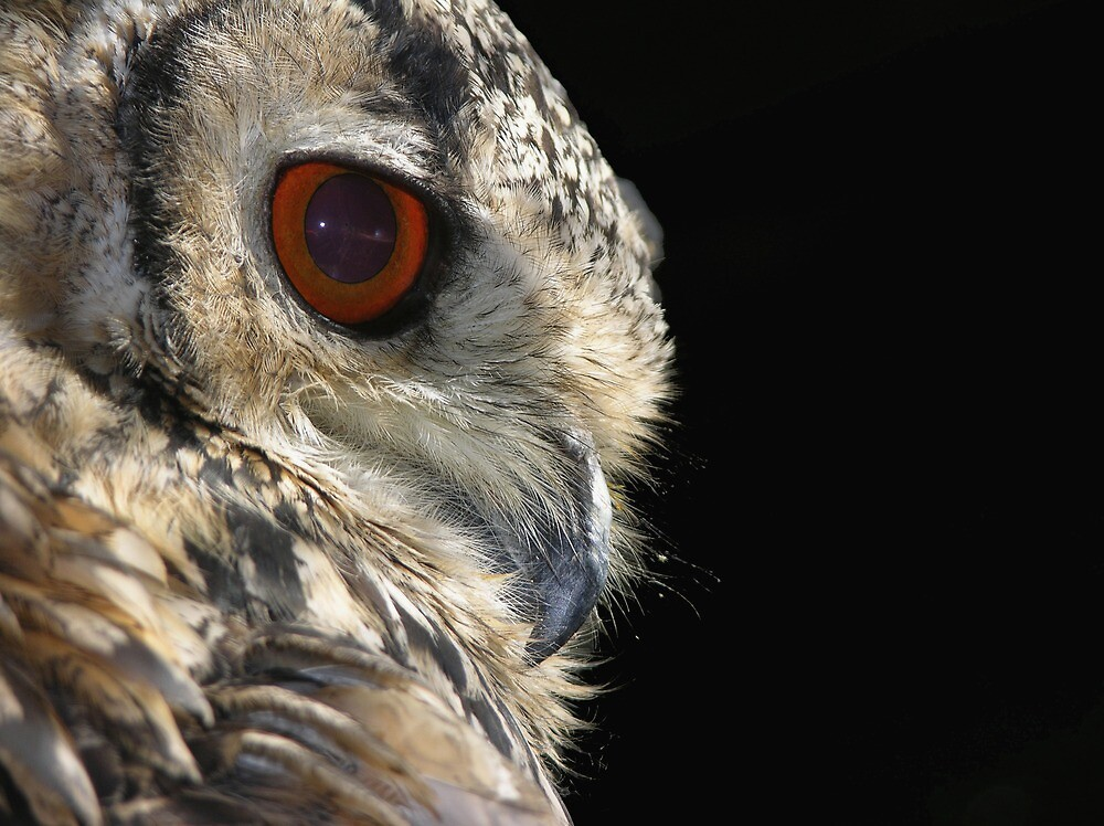 Eagle Owl by Jonathan Hughes