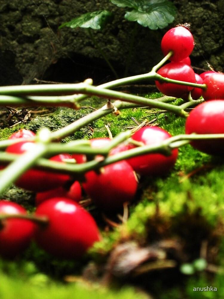 november berries by anushka