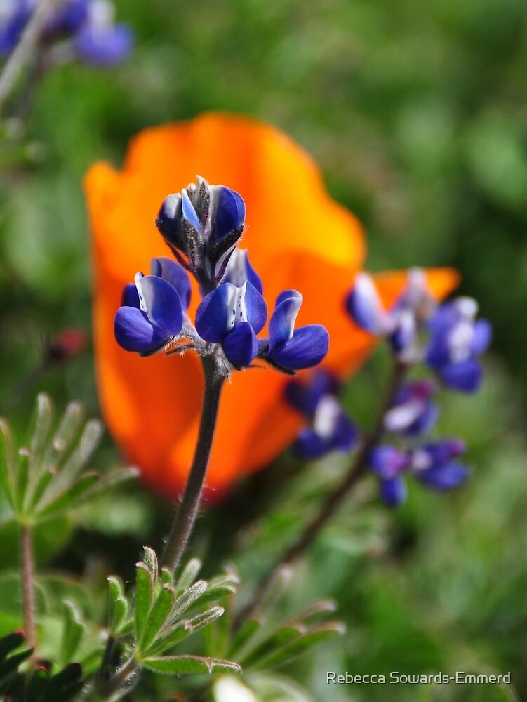 Lupine and California Poppy - Russian Ridge - Santa Cruz Mountains by Rebecca SowardsEmmerd