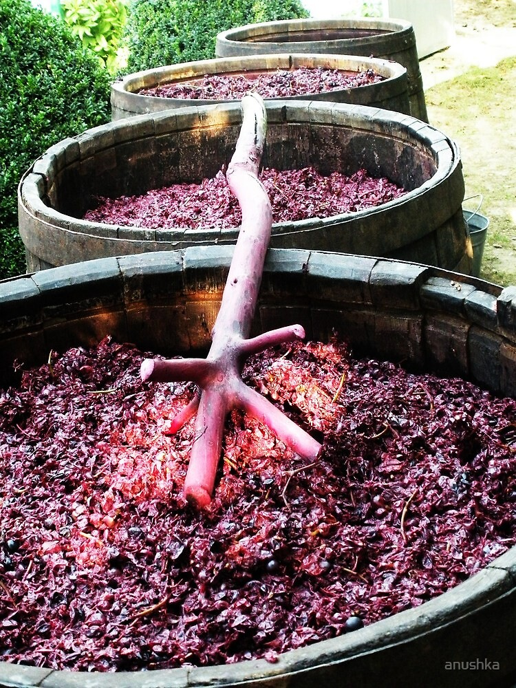 wine in process..:> by anushka