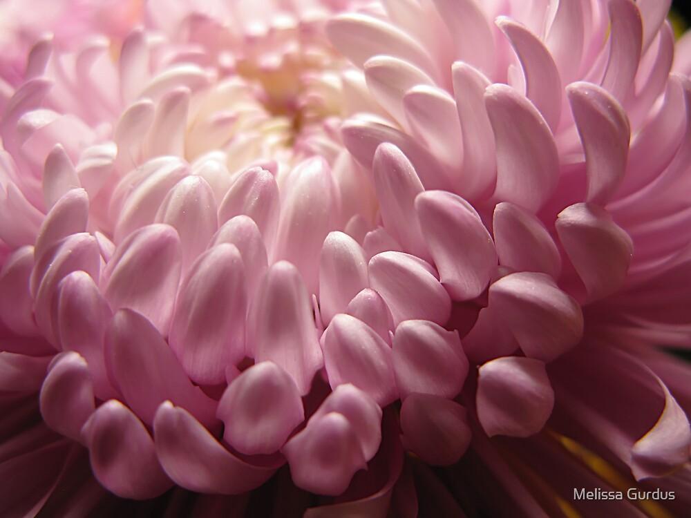 Floral Dynamics by Melissa Gurdus