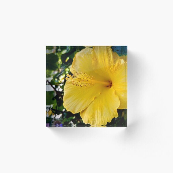 Yellow Flower Acrylic Block