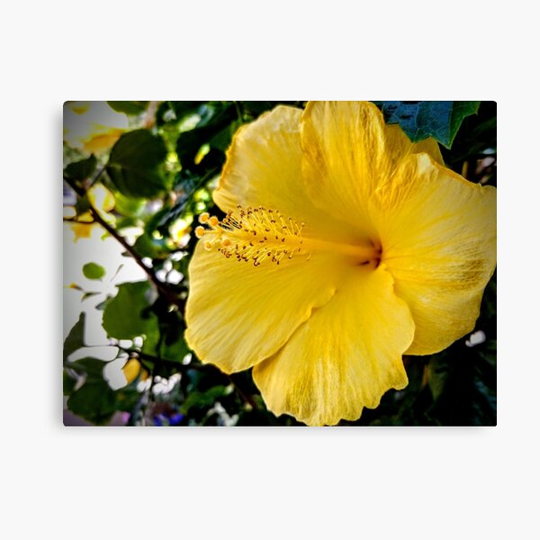 Yellow Flower Canvas Print