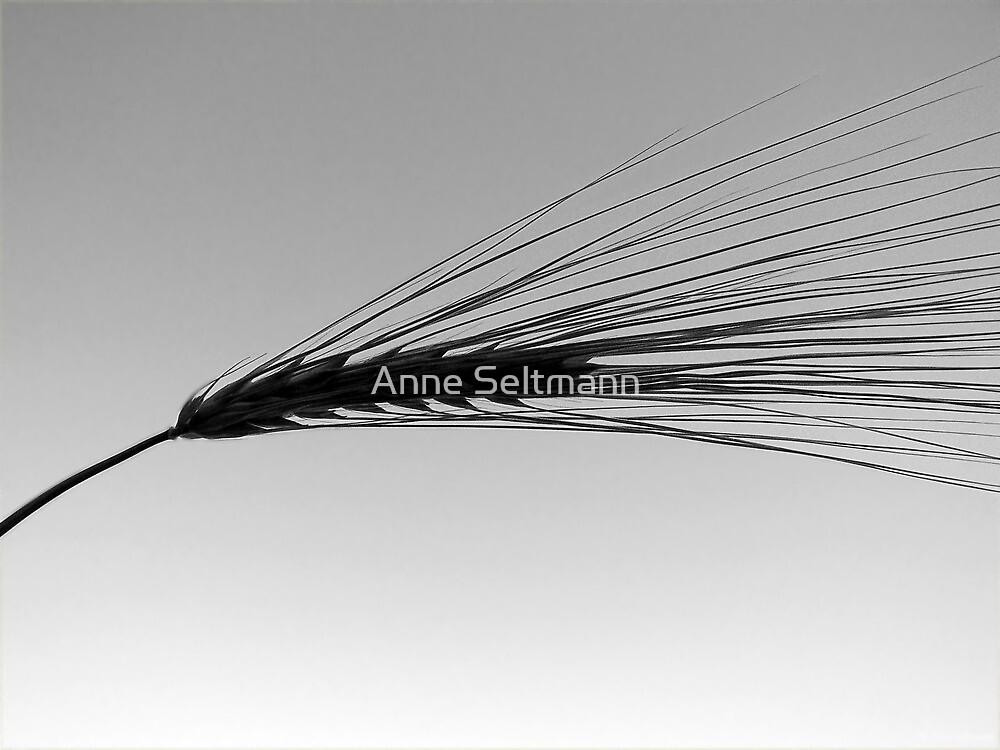 straw by Anne Seltmann