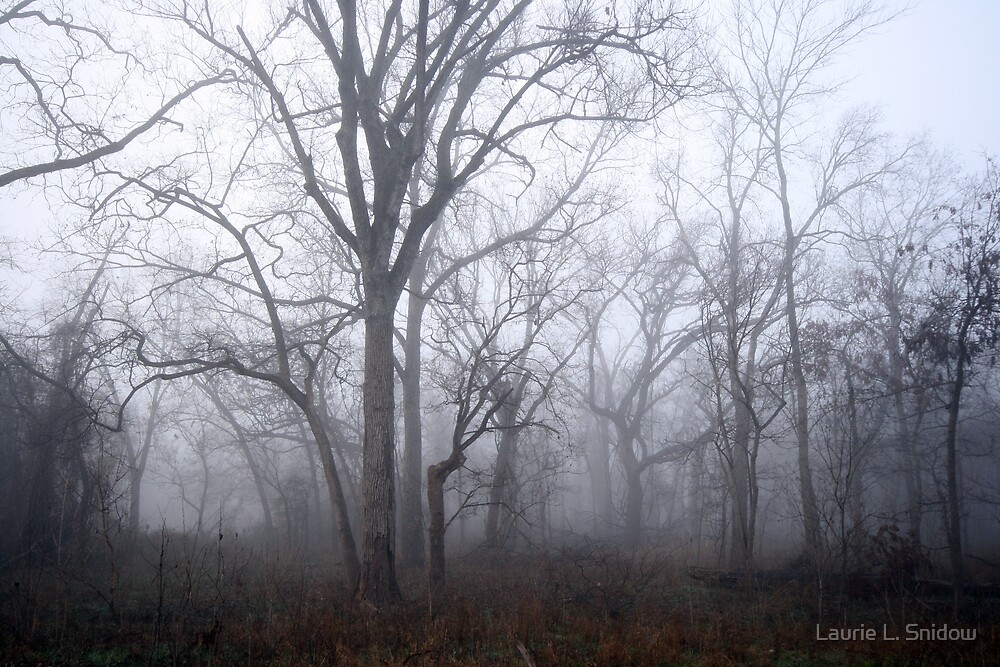Foggy morning by Laurie L. Snidow