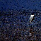 The white Heron after Sunset.....Lagoon Okarito.....New Zealand by Imi Koetz