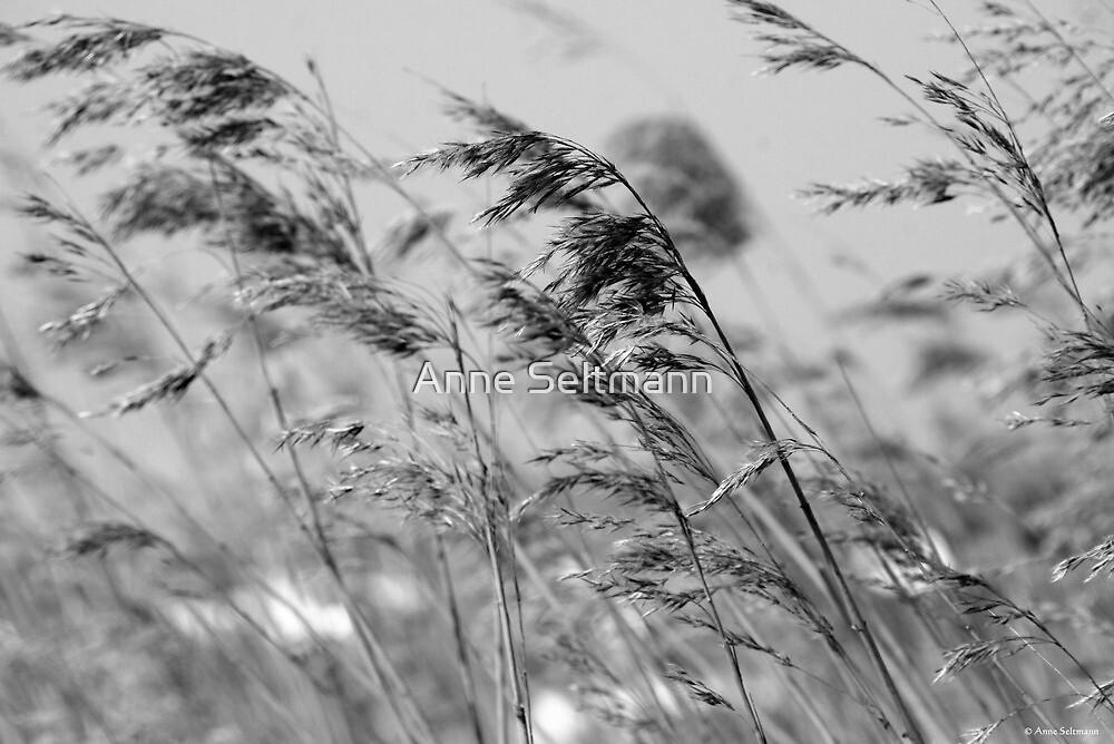 summer wind by Anne Seltmann