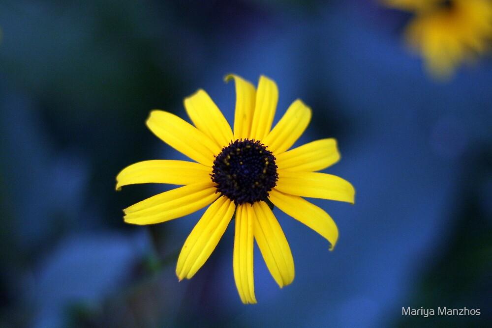 Yellow flower by Mariya Manzhos