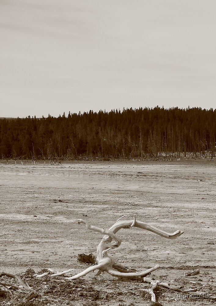 Curled tree branch in Yellowstone Park by rnrphoto98