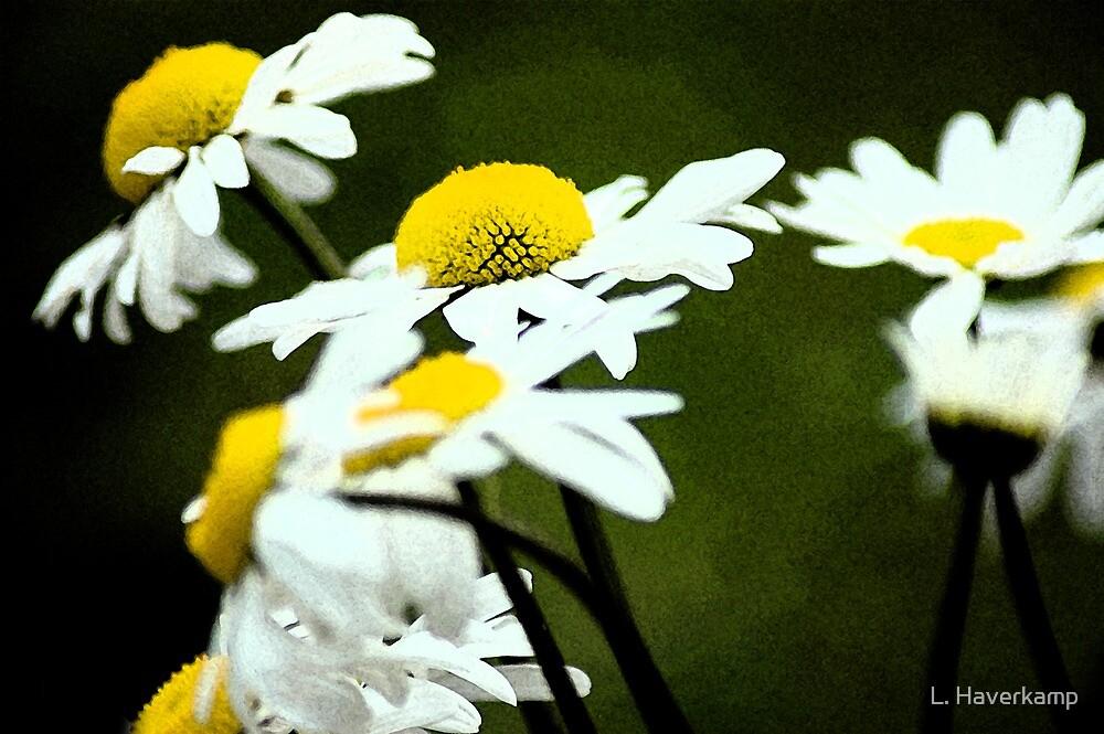 Daisy Daisy by L. Haverkamp