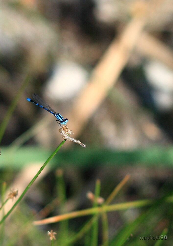 Blue Dragon by rnrphoto98