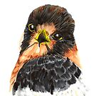 Glamour Falcon by RavensLanding