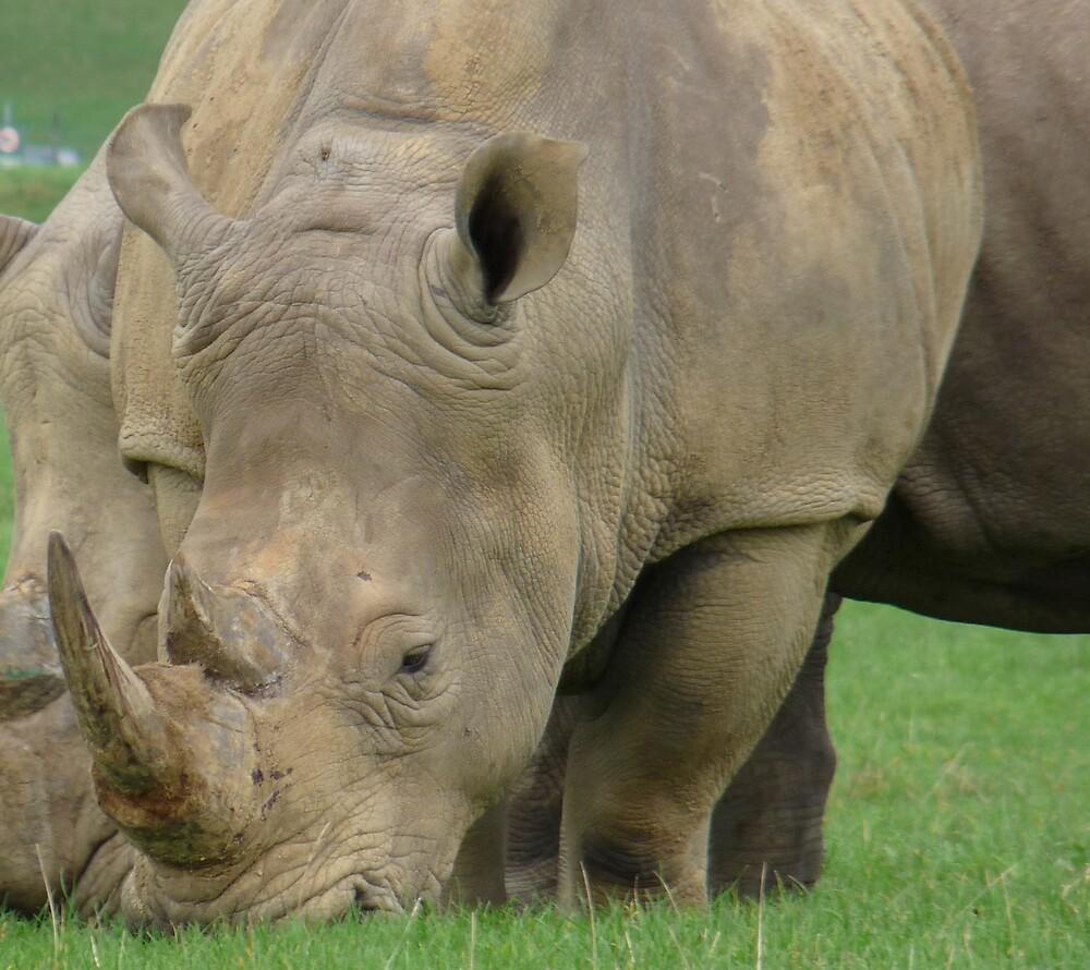 Rhino by KPrecious