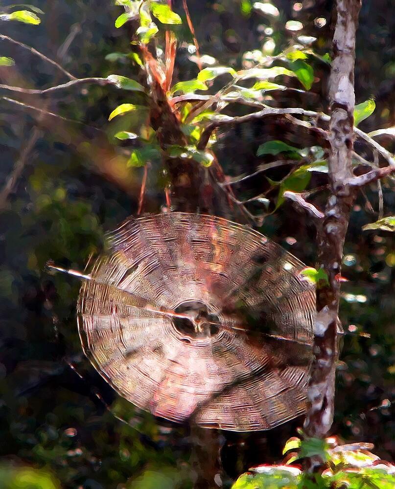 Web in the Woods by DottieDees