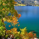 Aspens, Lake Sabrina by Rebecca SowardsEmmerd