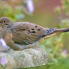 Mourning Dove On Bird Bath by Michael Cummings