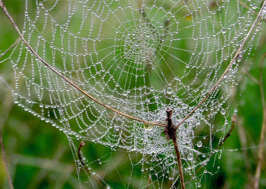 Création d'araignée by Yves313