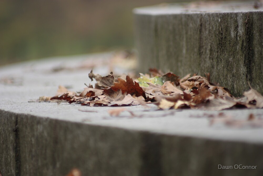 Autumn Leaves on Steps by Dawn OConnor