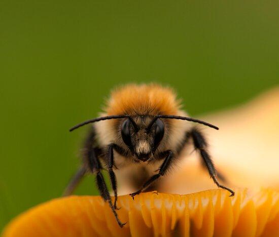Bee on a Toadstool II by Robert Kendall