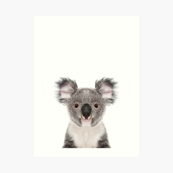 Koala Bear Portrait Art Print